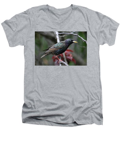 Common Starling Men's V-Neck T-Shirt by Trina Ansel