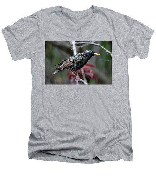 Common Starling Men's V-Neck T-Shirt