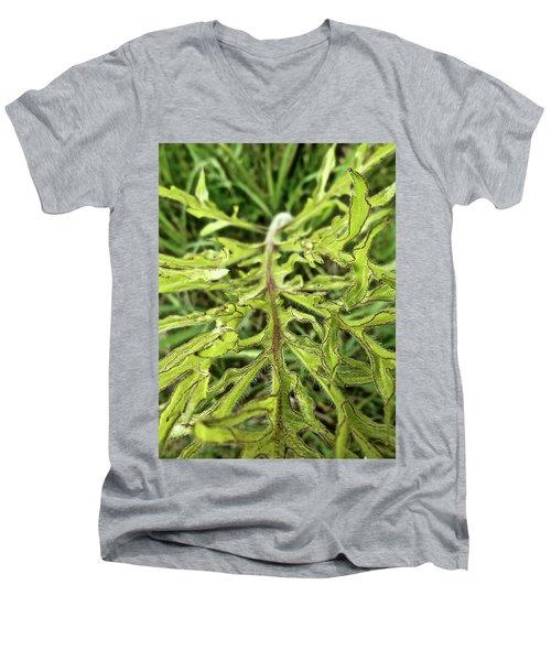 Compass Plant Men's V-Neck T-Shirt by Tim Good
