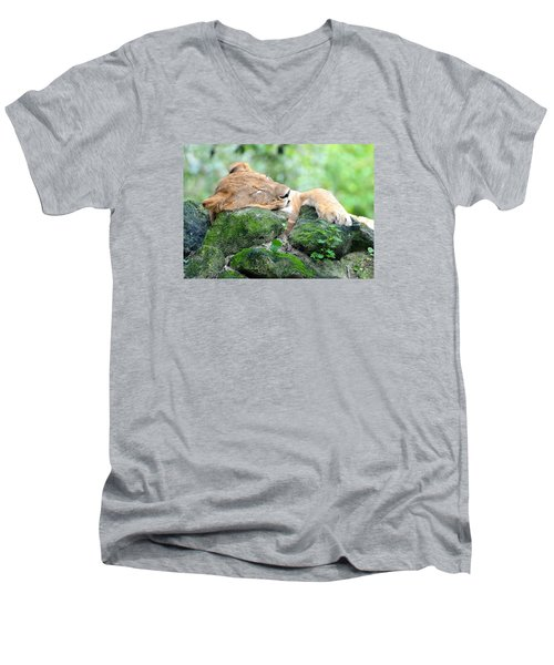 Contented Sleeping Lion Men's V-Neck T-Shirt by Richard Bryce and Family
