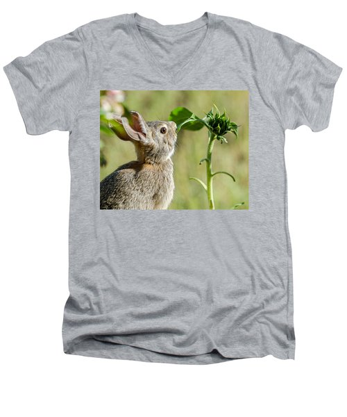 Cottontail Rabbit Eating A Sunflower Leaf Men's V-Neck T-Shirt by John Brink