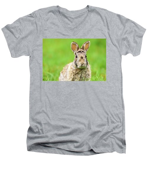 Cottontail Rabbit Men's V-Neck T-Shirt