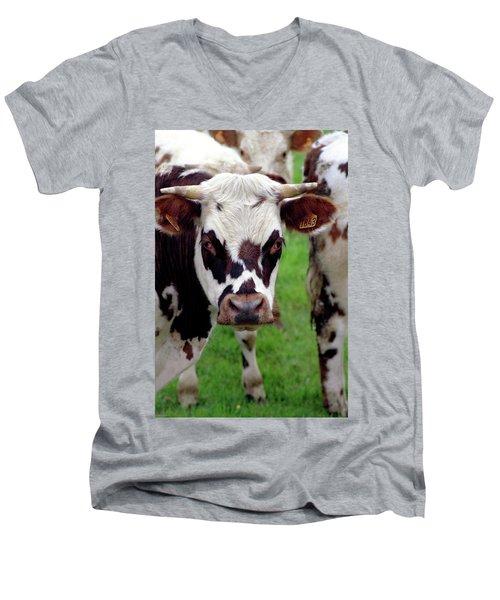 Cow Closeup Men's V-Neck T-Shirt