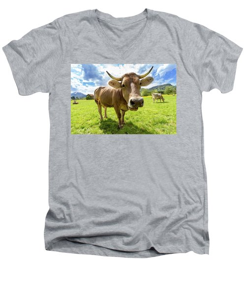 Men's V-Neck T-Shirt featuring the photograph Cow In Meadow by MGL Meiklejohn Graphics Licensing