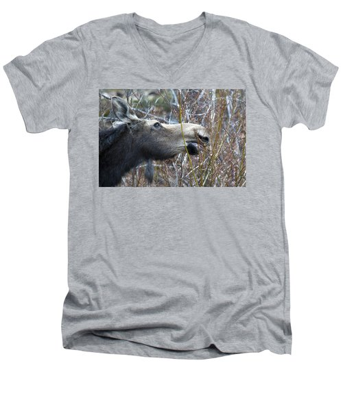 Cow Moose Dining On Willow Men's V-Neck T-Shirt