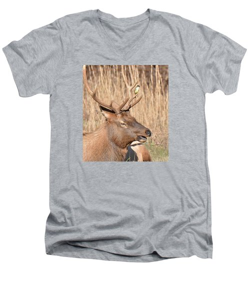 Creatures Great And Small Men's V-Neck T-Shirt by Alan Lenk