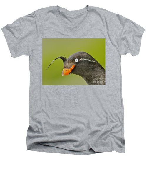 Crested Auklet Men's V-Neck T-Shirt