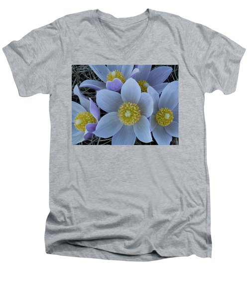 Crocus Blossoms Men's V-Neck T-Shirt
