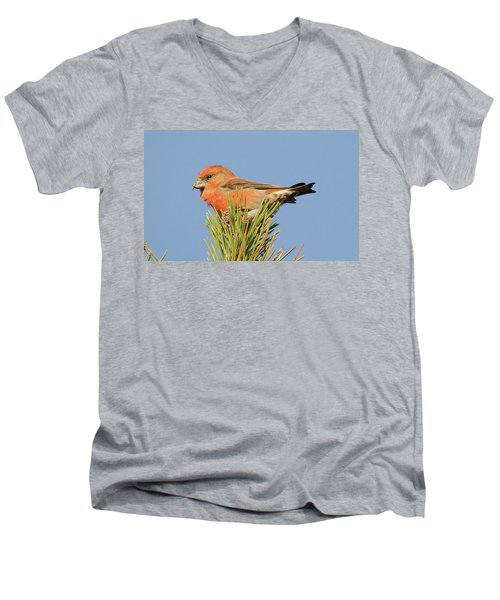 Crossbill Men's V-Neck T-Shirt by Judd Nathan