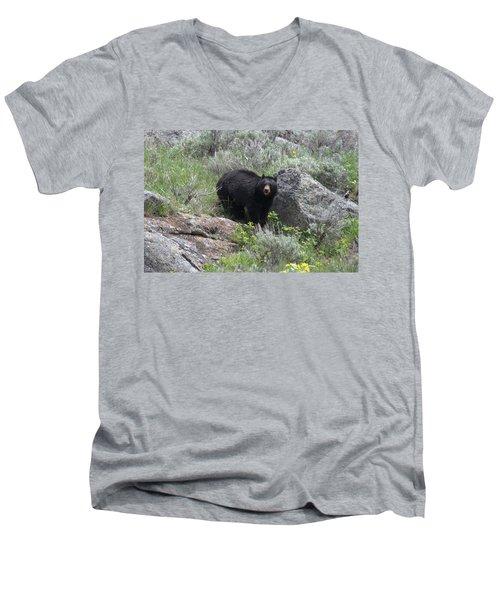 Curious Black Bear Men's V-Neck T-Shirt
