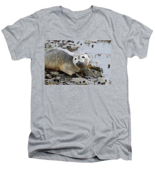 Curious Harbor Seal Pup Men's V-Neck T-Shirt by DejaVu Designs