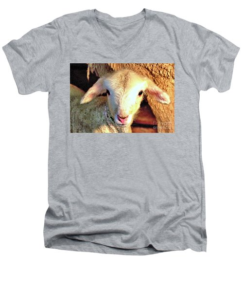 Curious Newborn Lamb Men's V-Neck T-Shirt