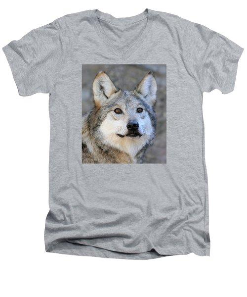 Curious Wolf Men's V-Neck T-Shirt by Elaine Malott