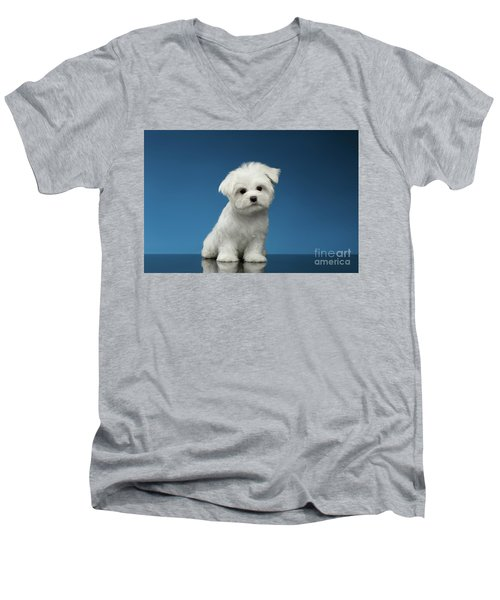 Cute Pure White Maltese Puppy Standing And Curiously Looking In Camera Isolated On Blue Background Men's V-Neck T-Shirt
