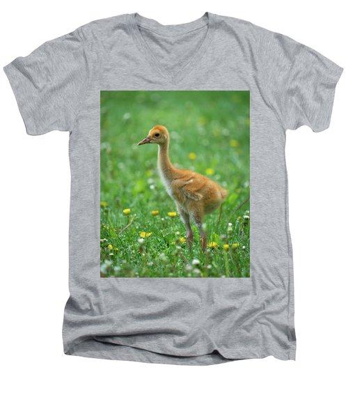Cuteness Men's V-Neck T-Shirt