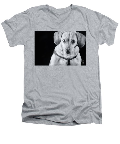 Dachshund Lab Mix Men's V-Neck T-Shirt