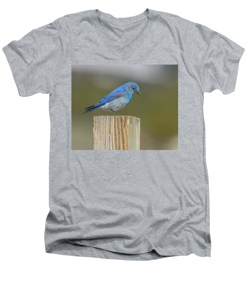 Daddy Bluebird Guarding Nest Men's V-Neck T-Shirt