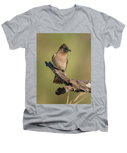 Dark-capped Bulbul Men's V-Neck T-Shirt