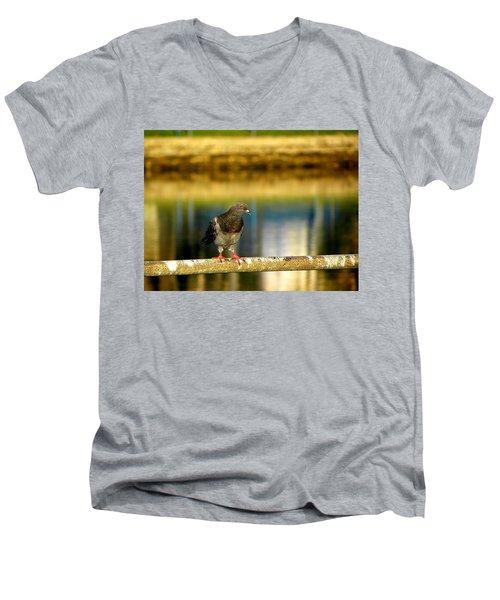 Daytona Beach Pigeon Men's V-Neck T-Shirt by Chris Mercer
