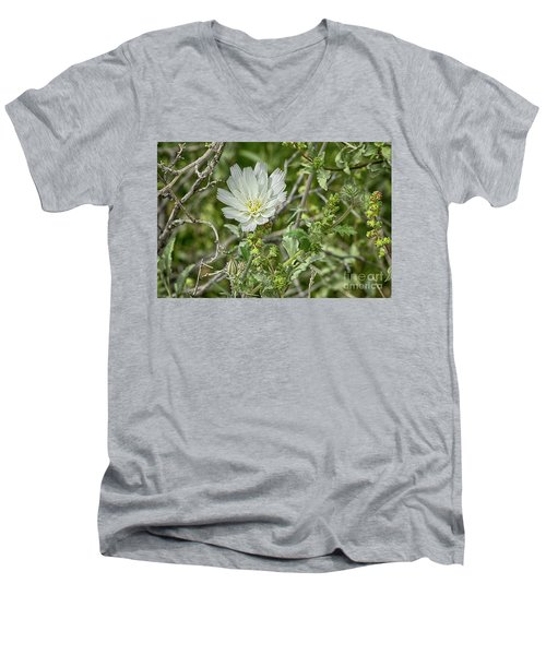 Men's V-Neck T-Shirt featuring the photograph Desert Chicory   Rafinesquia Neomexicana by Anne Rodkin