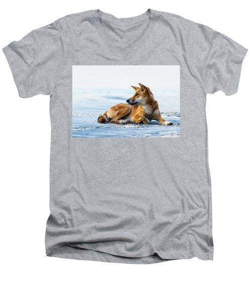Dingo On Fraser Island Beach Men's V-Neck T-Shirt