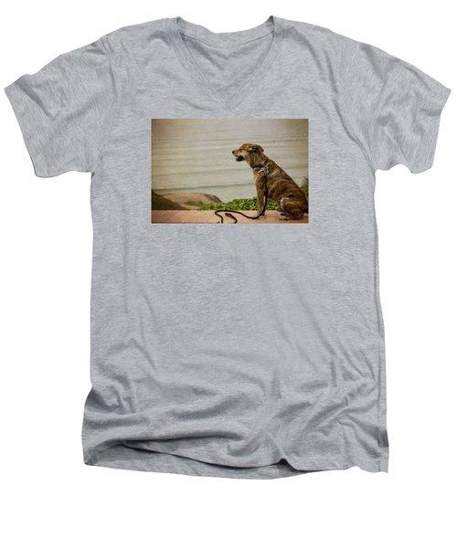 Dog On The Beach Men's V-Neck T-Shirt