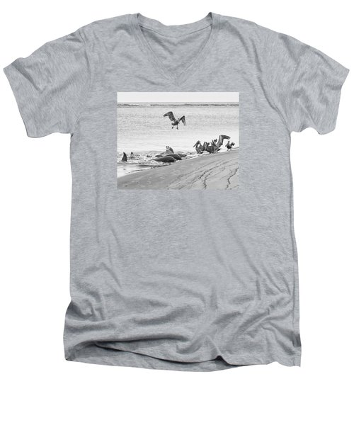 Dolphin And Pelican Party Men's V-Neck T-Shirt by Patricia Schaefer