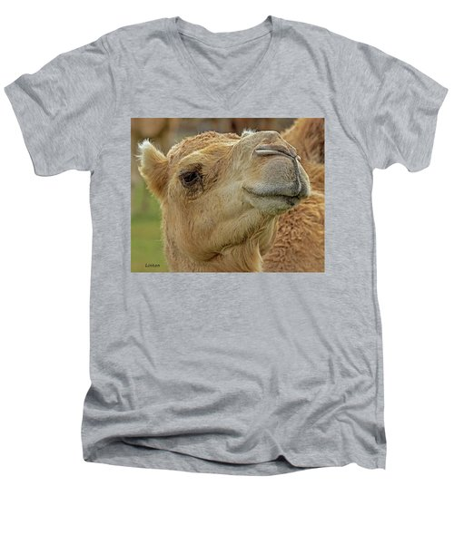 Dromedary Or Arabian Camel Men's V-Neck T-Shirt
