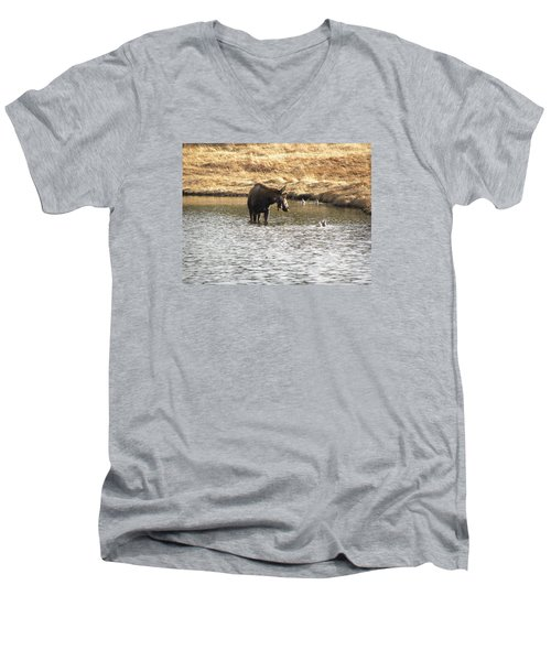 Ducks - Moose Rollinsville Co Men's V-Neck T-Shirt