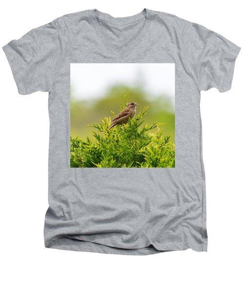 Dunnok Men's V-Neck T-Shirt