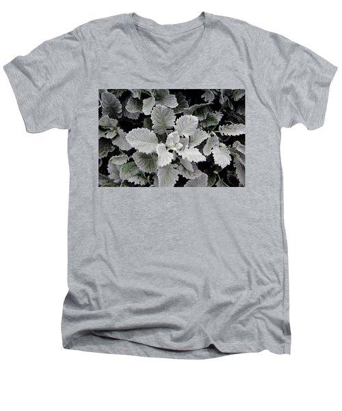 Dusty Miller Men's V-Neck T-Shirt