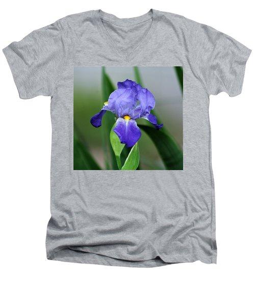 Dwarf Iris 9834_2 Men's V-Neck T-Shirt