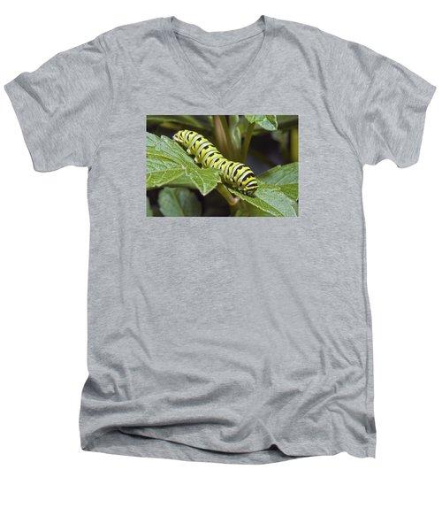 Eastern Black Swallowtail Caterpillar IIi Men's V-Neck T-Shirt