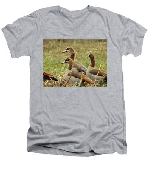 Men's V-Neck T-Shirt featuring the photograph Egyptian Geese by Betty-Anne McDonald