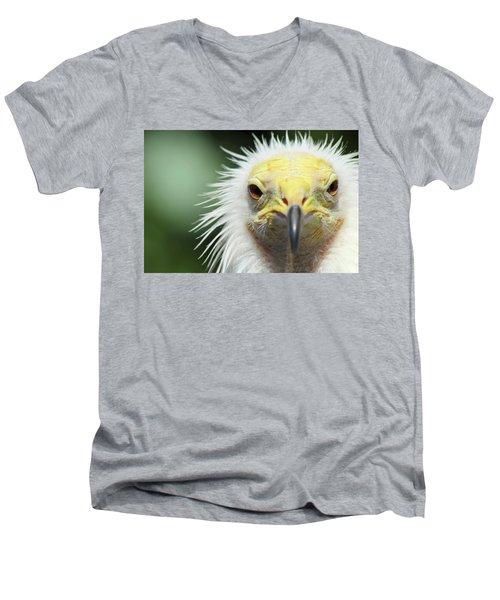 Egyptian Vulture Men's V-Neck T-Shirt by David Stasiak