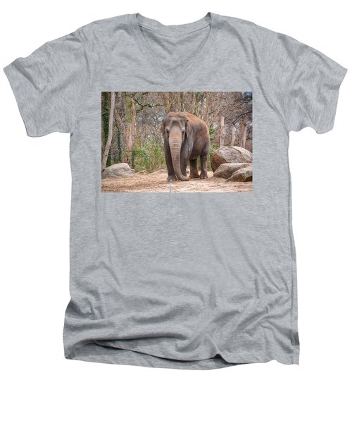 Elephant Men's V-Neck T-Shirt
