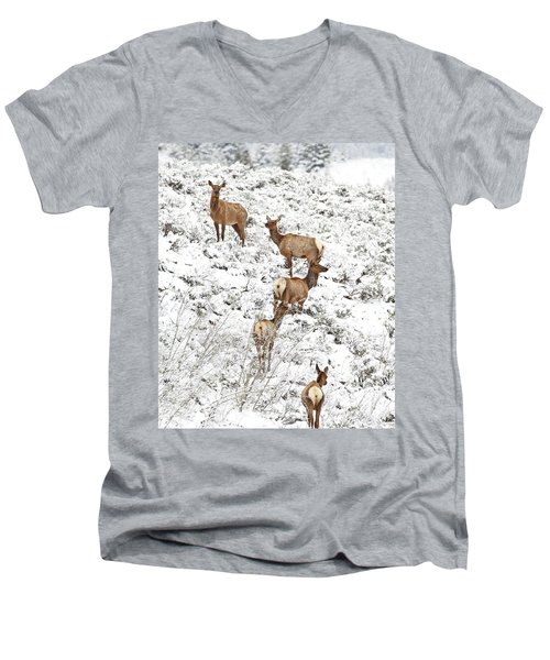 Elk Cows In Snow Men's V-Neck T-Shirt