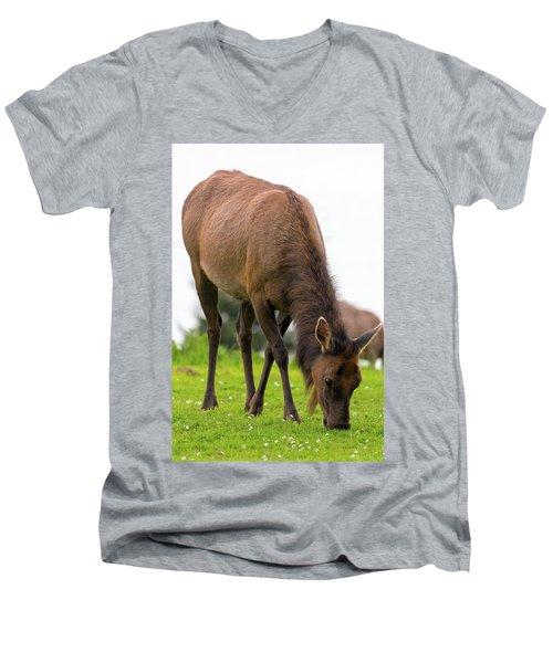 Elk Grazing On Green Pasture Closeup Men's V-Neck T-Shirt
