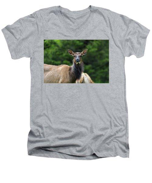 Elk Staring Closeup Portrait Men's V-Neck T-Shirt