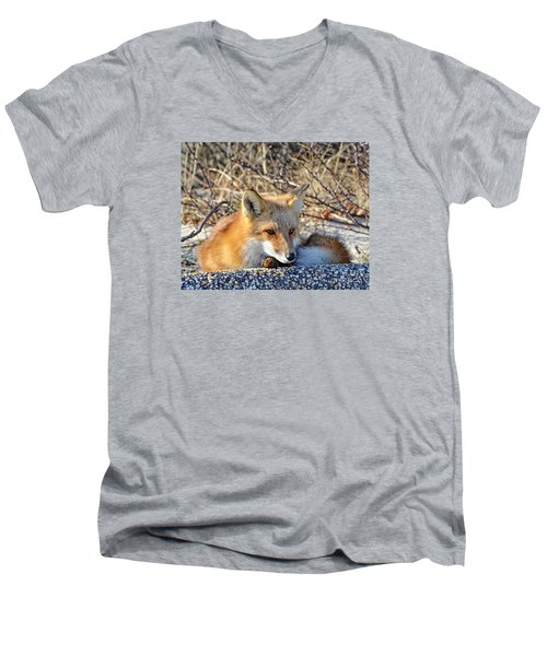 Men's V-Neck T-Shirt featuring the photograph Enjoying The Sun by Sami Martin
