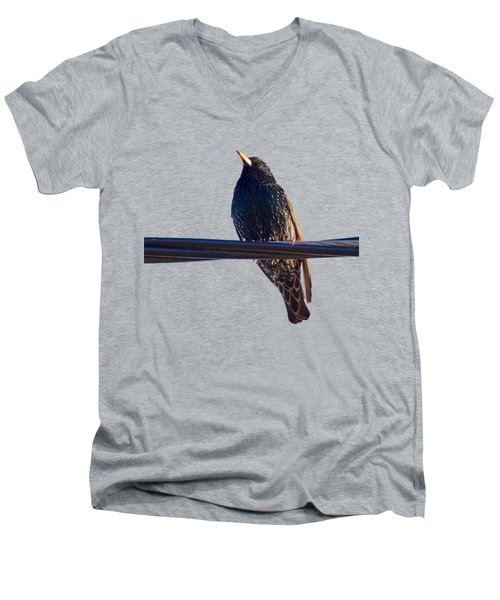 European Starling Trasparent Background Men's V-Neck T-Shirt