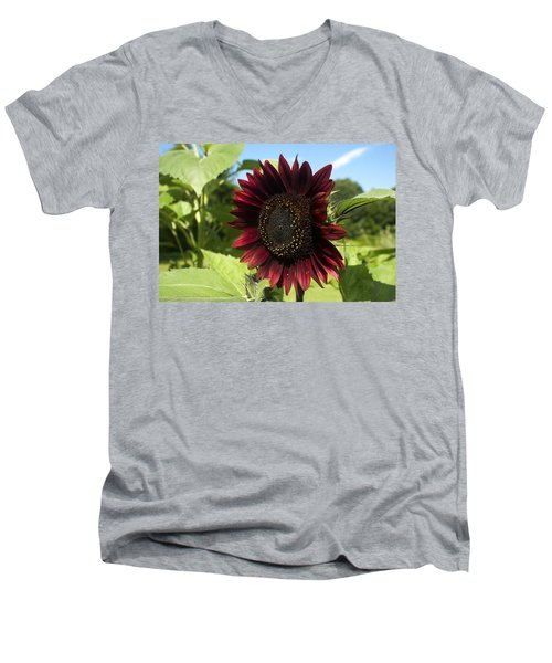 Evening Sun Sunflower #1 Men's V-Neck T-Shirt by Jeff Severson