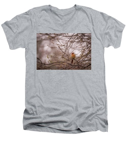 Men's V-Neck T-Shirt featuring the photograph Female Cardinal In Spring 2017 by Terry DeLuco