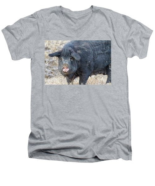 Men's V-Neck T-Shirt featuring the photograph Female Hog by James BO Insogna