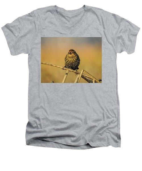 Female Red-winged Blackbird  Men's V-Neck T-Shirt