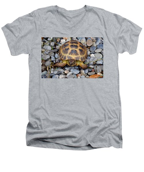 Female Russian Tortoise Men's V-Neck T-Shirt
