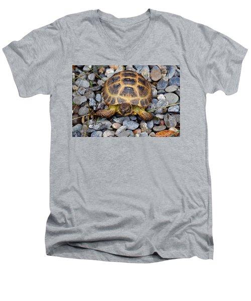 Female Russian Tortoise Men's V-Neck T-Shirt