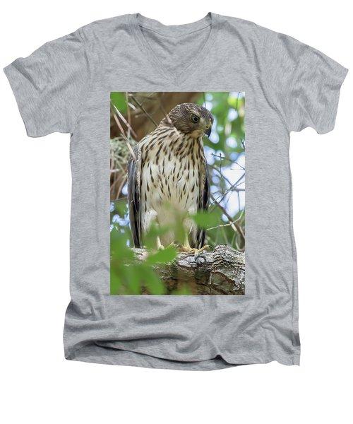 Fledgling Red-shouldered Hawk 2 Men's V-Neck T-Shirt