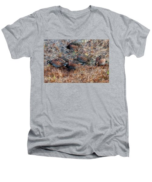 Flock Of Quail Feeding In Field Men's V-Neck T-Shirt