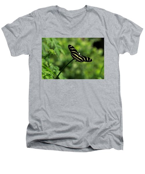 Florida State Butterfly Men's V-Neck T-Shirt by Greg Allore